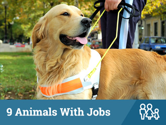 9 Animals With Jobs