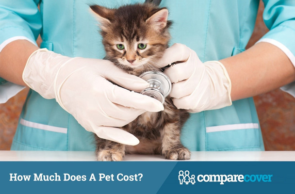 How Much Does a Pet Cost?