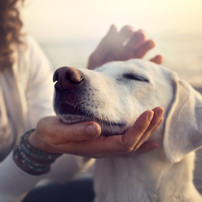 How to Travel With Pets: Our Top Tips