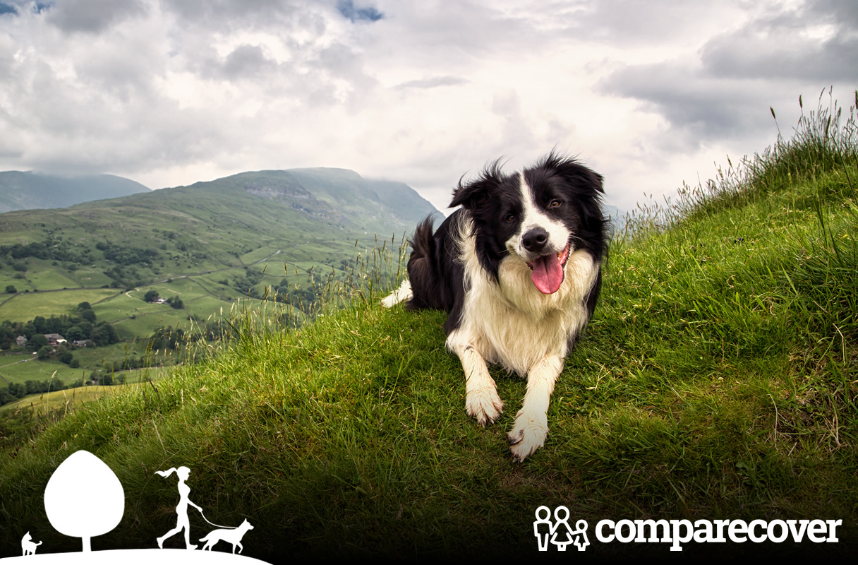 Wonderful Walks for You & Your Dog in The Lake District