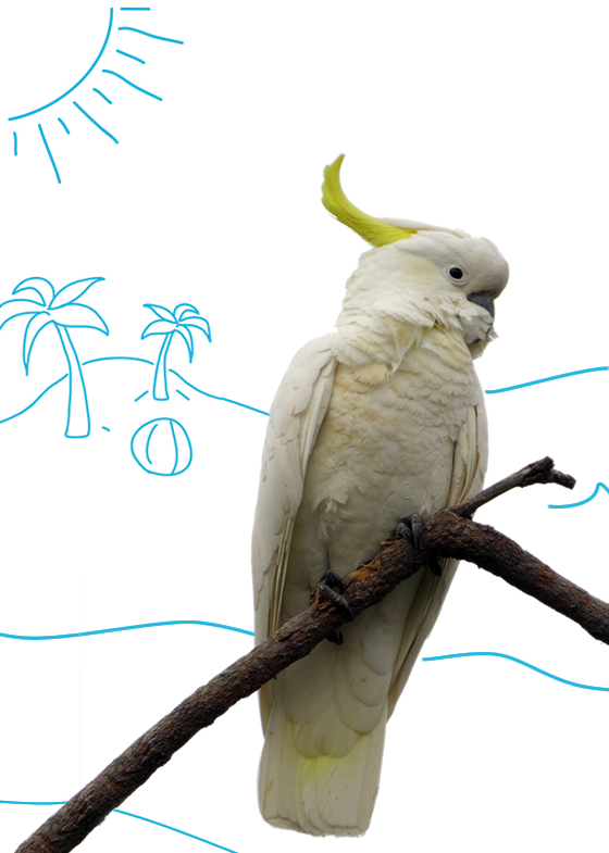 White cockatoo chilling on a branch near a beach