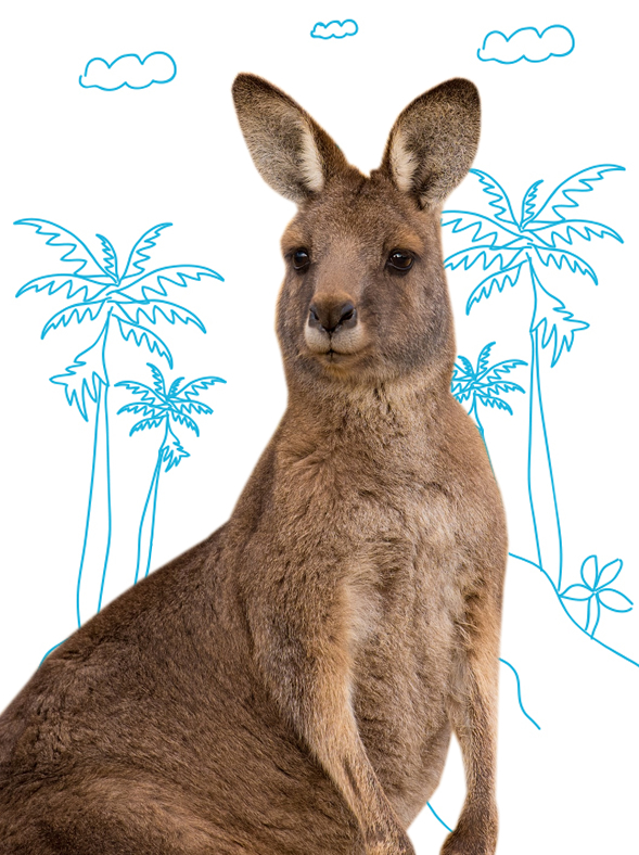 A really rather decent kangaroo